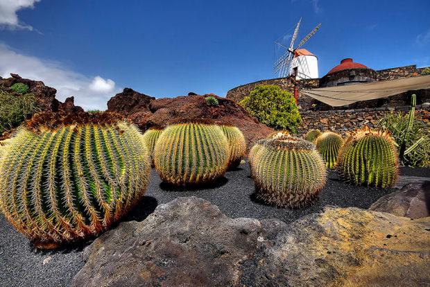 César Manrique e il Giardino dei Cactus