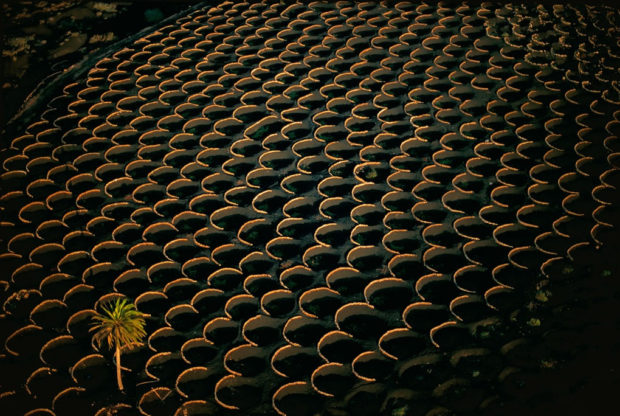 vini delle Canarie