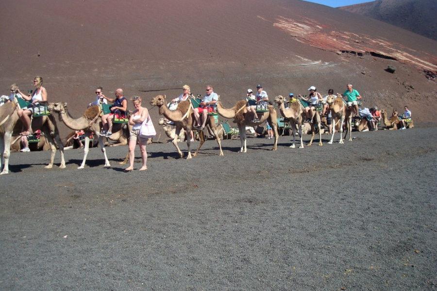 Escursioni a cammello Lanzarote
