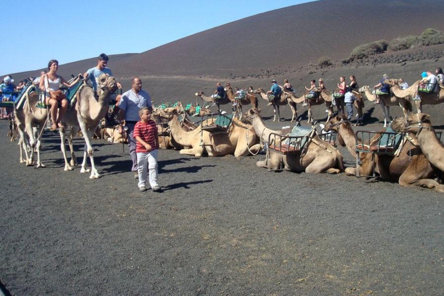 tour cammelli lanzarote